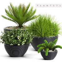 3d plants 71 model