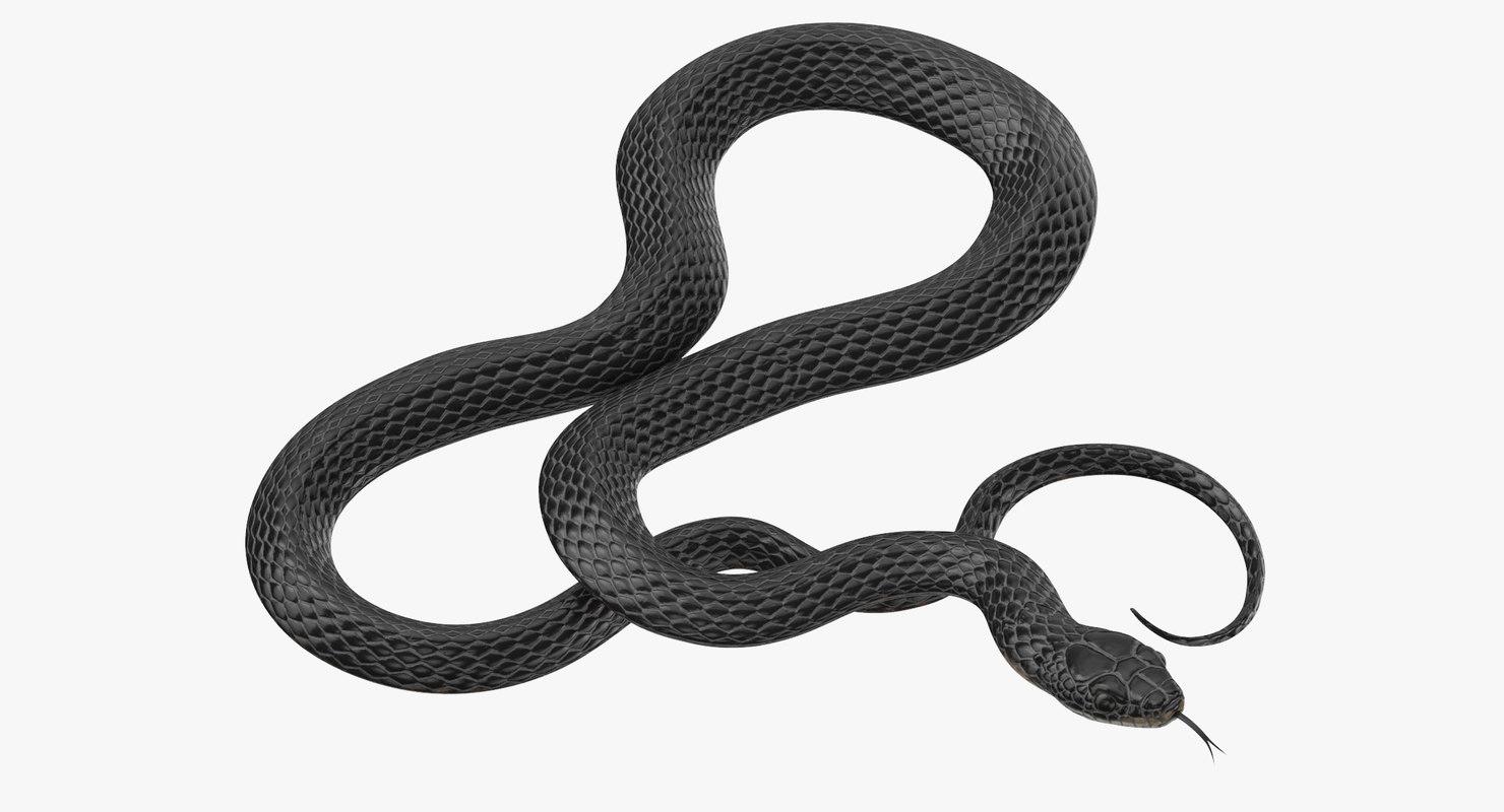 black snake 03 max