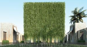 3d vernonia elliptica