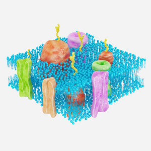 membrane cell 3d max