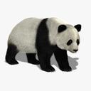 Panda Bear 3D models