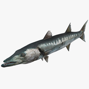 barracuda fish 3d model