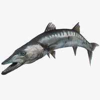 barracuda fish pose 2 3d model