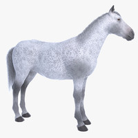 3d realistic white horse