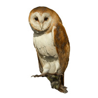 scan stuffed barn owl 3d obj