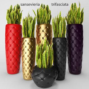 sansevieria trifasciata 3d model