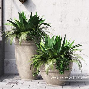 3d model fern