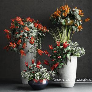 flowers max