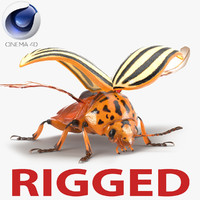 Colorado Potato Beetle 2 Rigged for Cinema 4D
