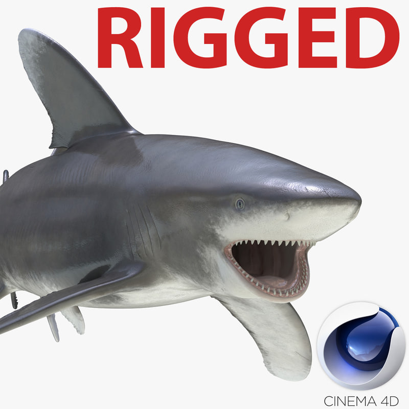 3d model of oceanic whitetip shark rigged