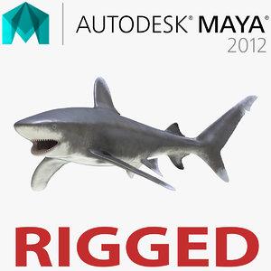 oceanic whitetip shark rigged 3d model