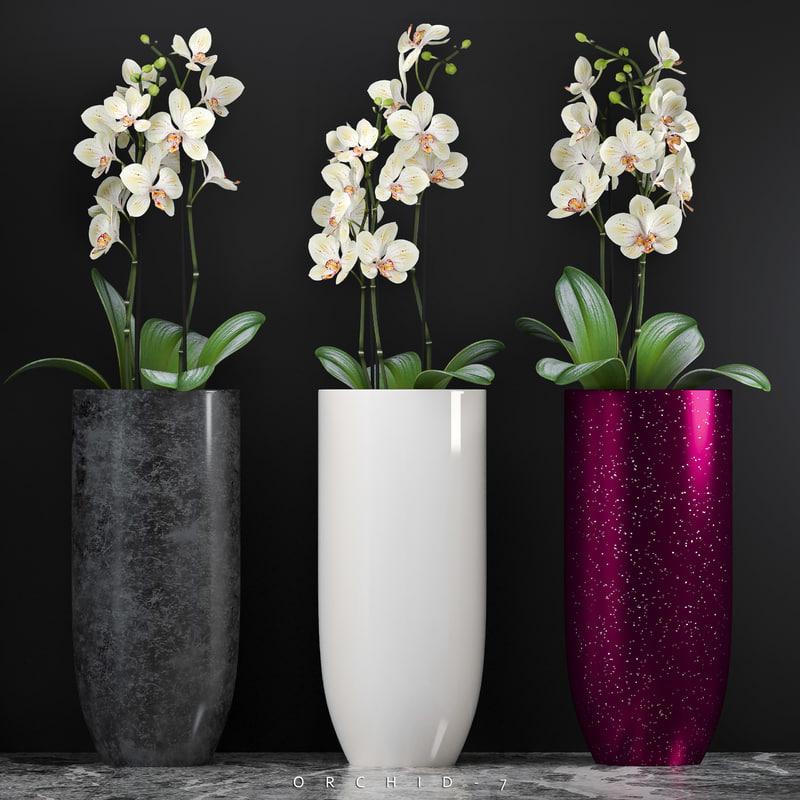 orchid 7 3d max