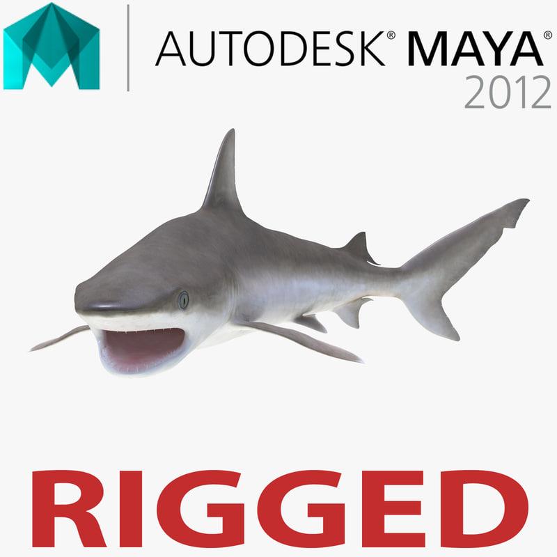 blacknose shark rigged 3d ma