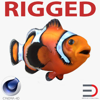 clownfish rigged c4d