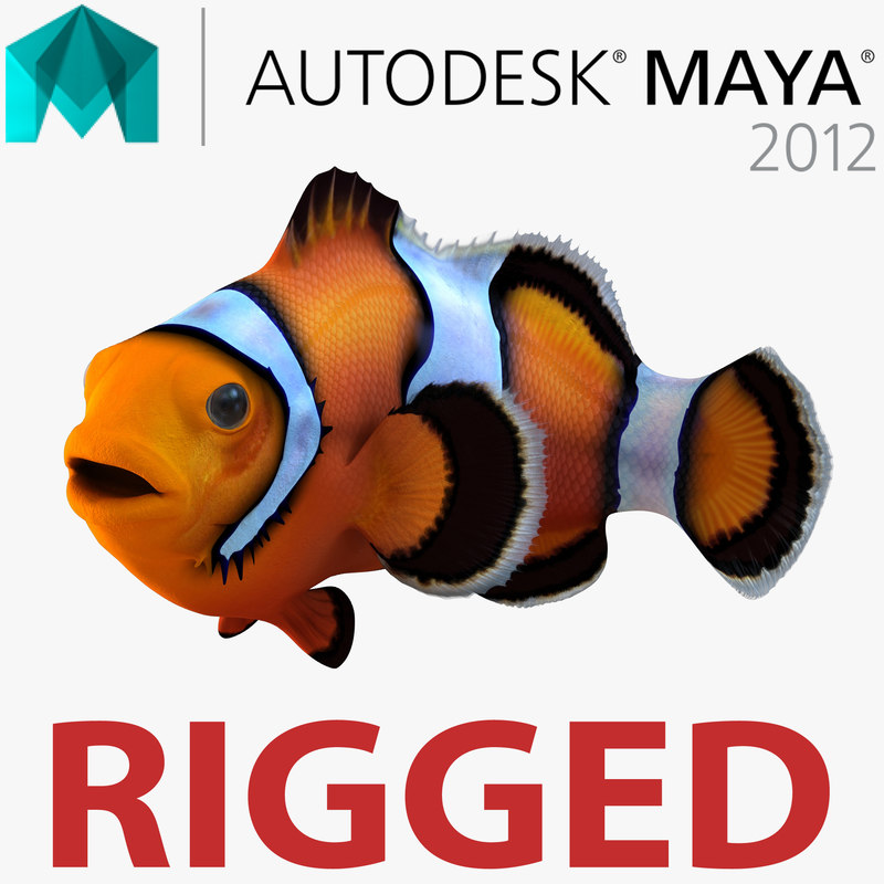 3d clownfish rigged model