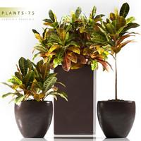3d plant 75 croton model