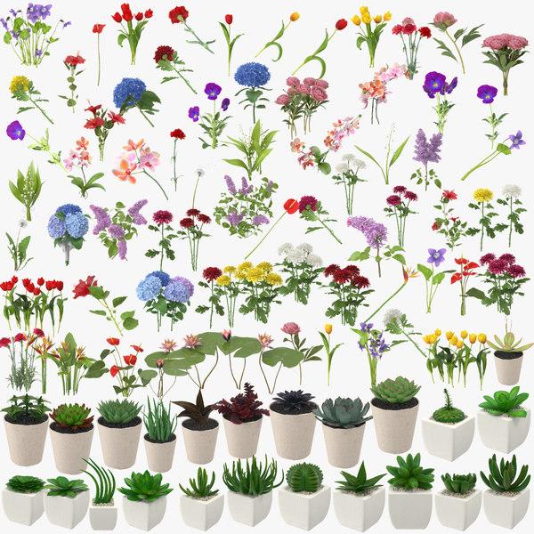 3d 74 flowers 23 succulents model