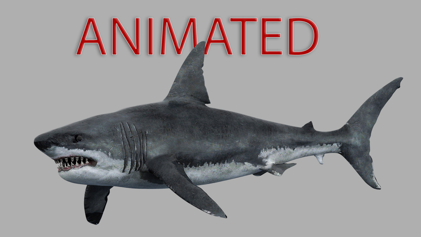 realistic great white shark animation 3d model