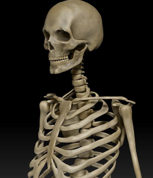 obj anatomically human skeleton