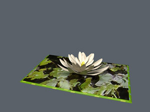 3d model pop water lilly card