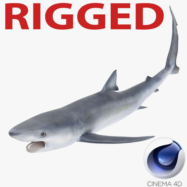 3d model blue shark rigged