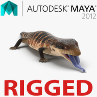 3d blue tongued skink rigged model