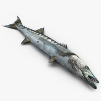 3d barracuda fish lying floor model
