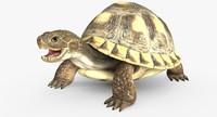 dxf turtle