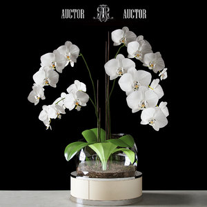 3d orchid auctor model