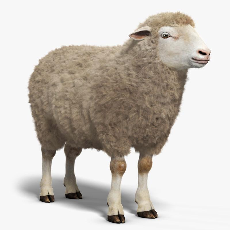 3d model sheep fur