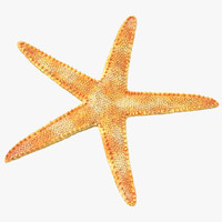 3d model of dried flat starfish