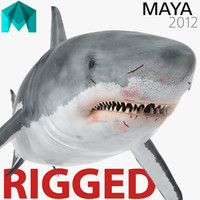 Great White Shark Rigged for Maya