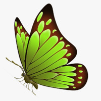 3d model beautiful butterfly cartoon