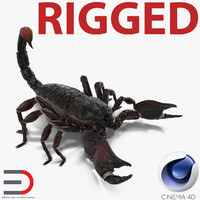 black scorpion rigged c4d