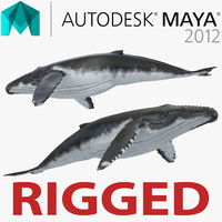 Humpback Whale Rigged for Maya