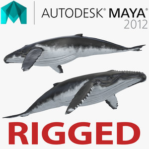 3d humpback whale rigged