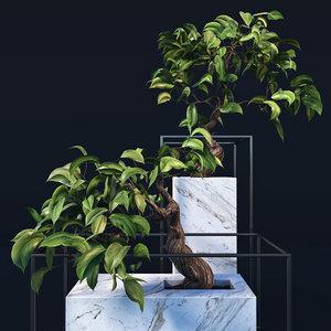 3d bonsai trees