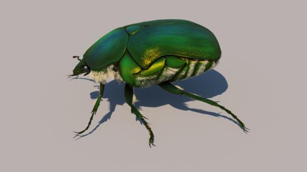 rose chafer bug 3d model