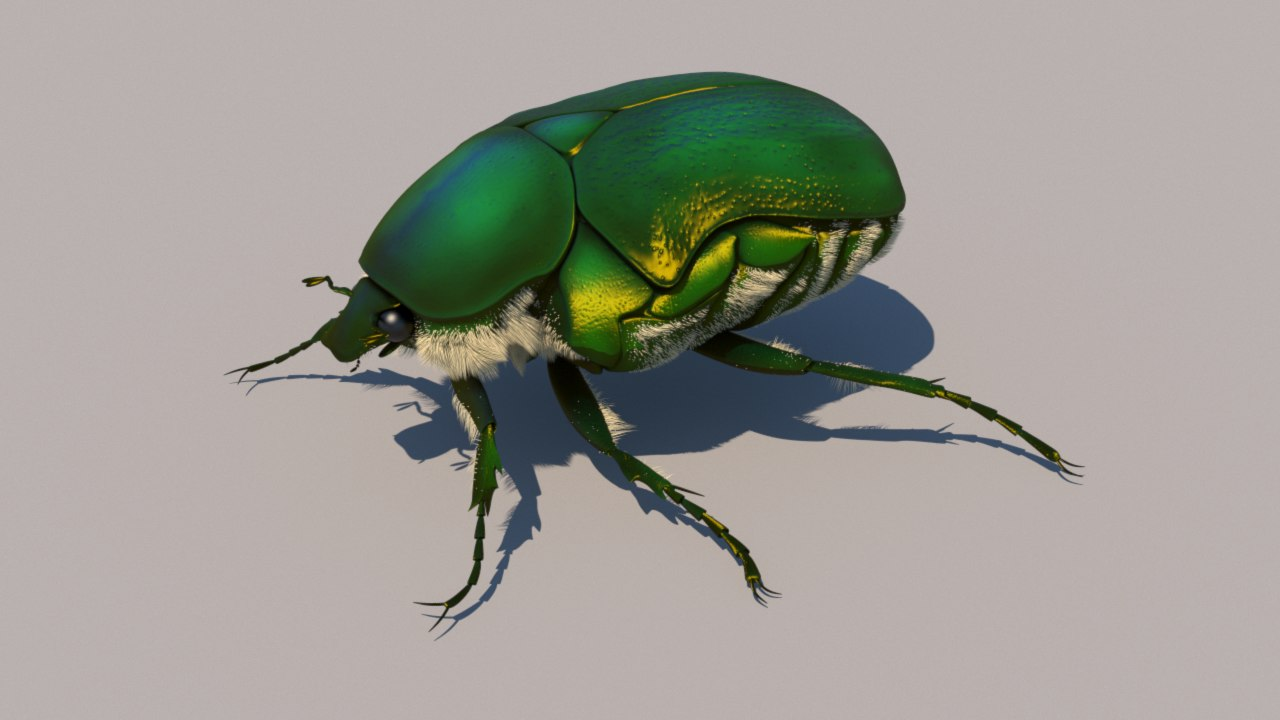 rose chafer bug 3d model