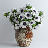 White anemonas