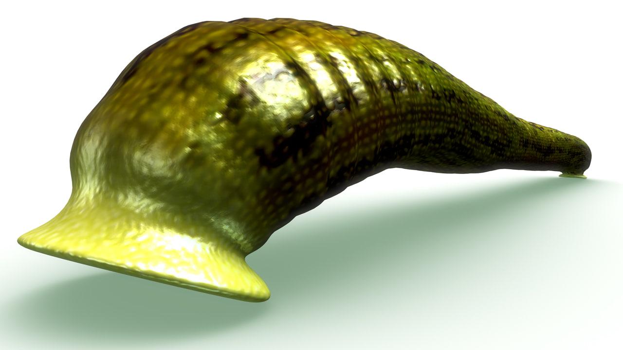 haemadipsa leeches tropical obj