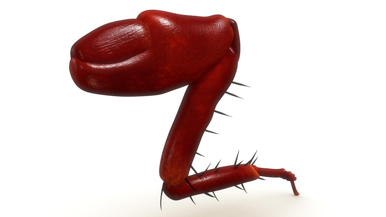cockroach leg 3d ma