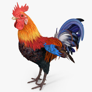 3d rooster colors realistic model