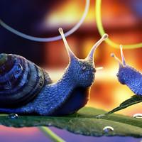 ma snail