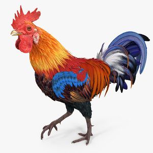 rooster walking 3d max
