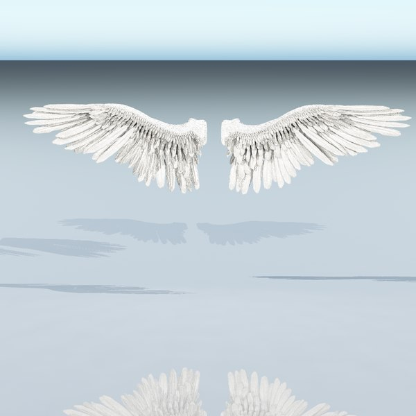 3d fully rigged bird wings