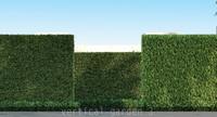 3 plants grass max