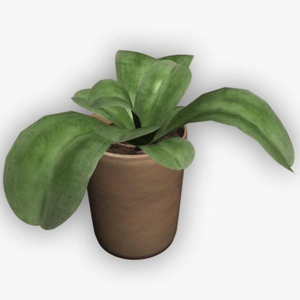 3d plants pots model