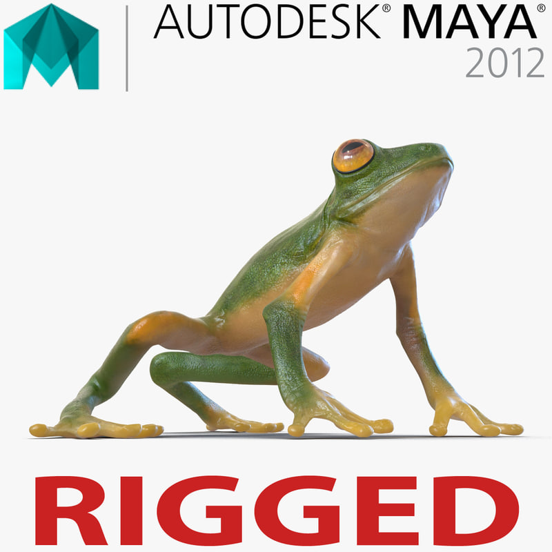 3d tree frog rigged model