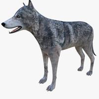 3d wolf